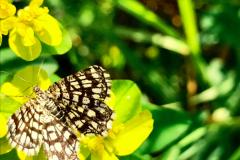 Butterblume und Schmetterling